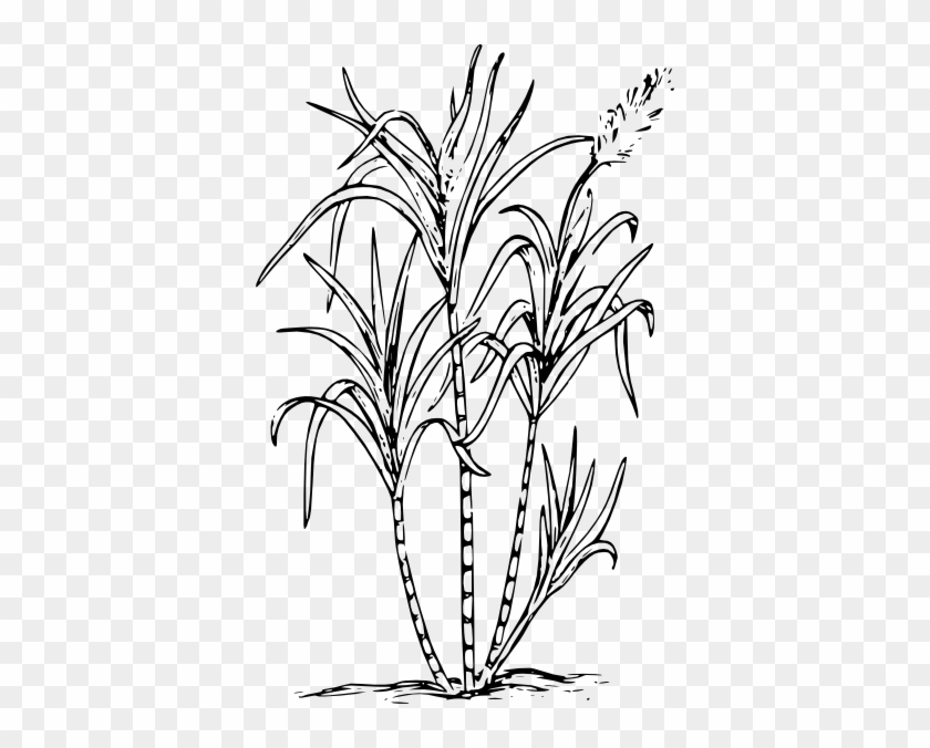 sugar cane outline free transparent png clipart images download