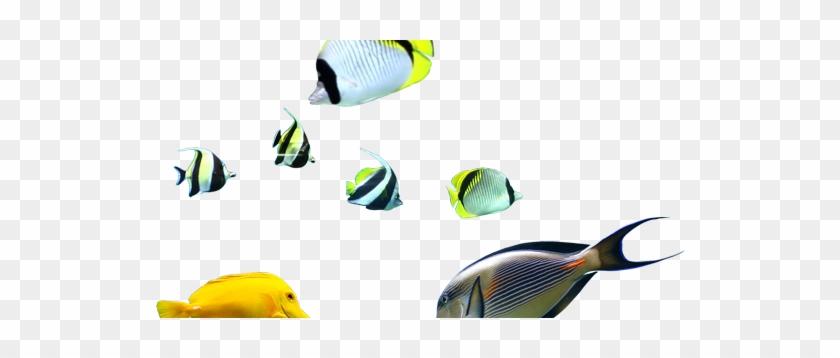 Coral Reef Fish #422466