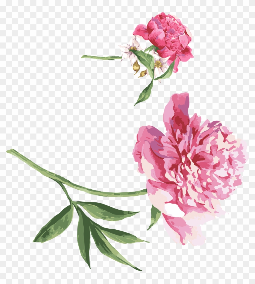 Moutan Peony Watercolor Painting Download - Get Well Soon