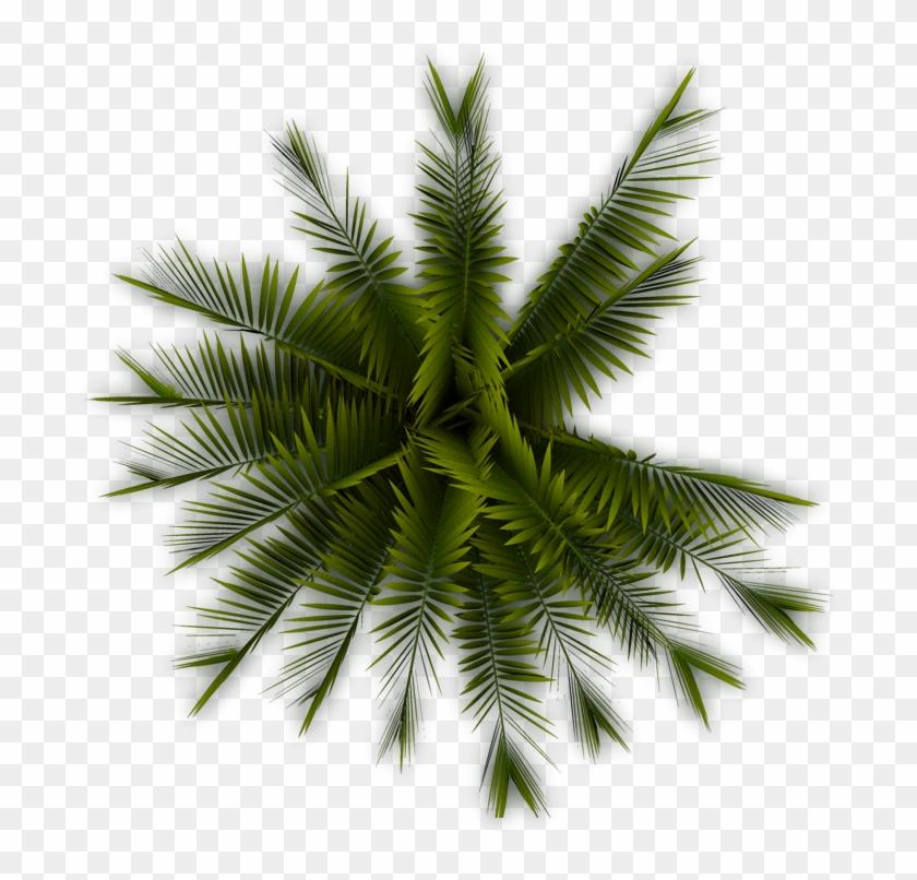 A56 Palmtree Pp - Palm Tree Top View Png #424991