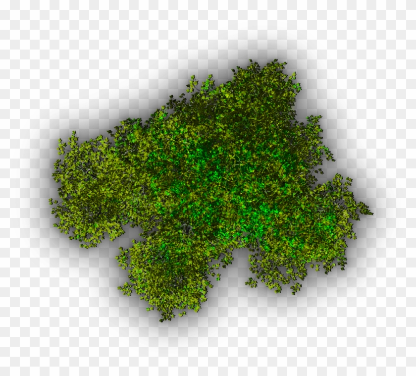 Background Top Tree Transparent Image - Top View Trees Transparent #425015