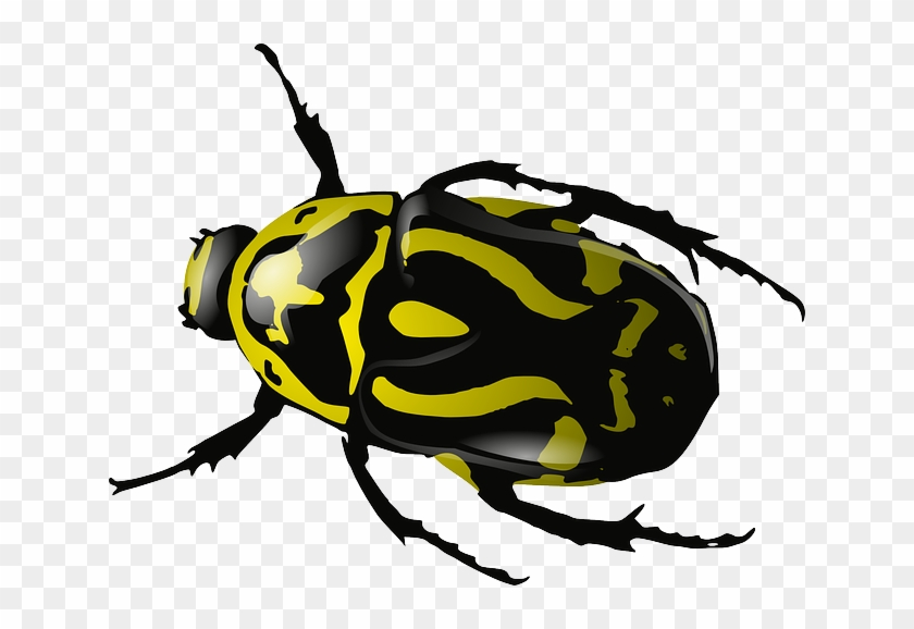Free Vector Graphic - Beetles Clipart #425037