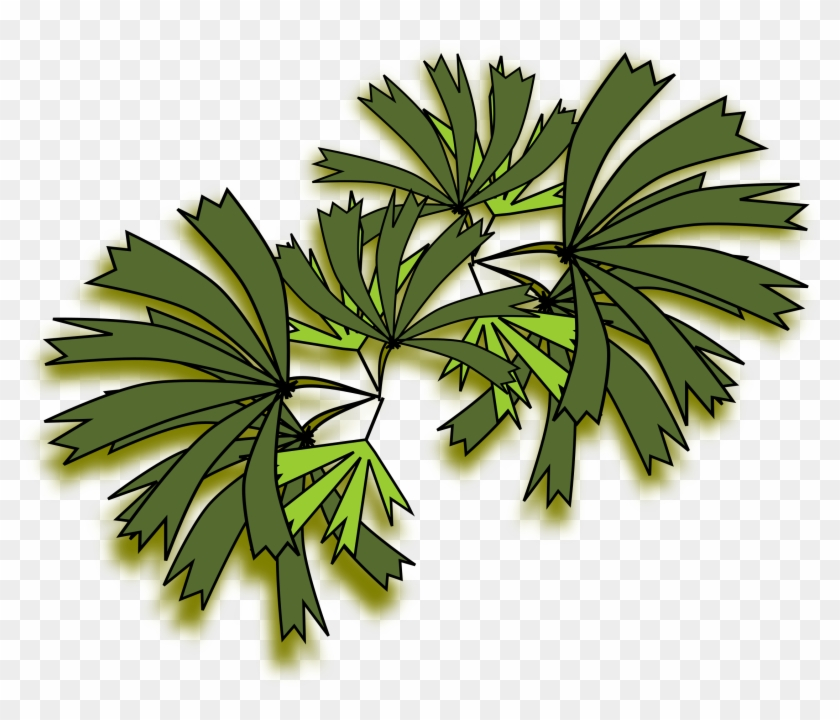 Palmeira Raphis For Palm Tree Top View Png 131fsj - Palm Trees #425042