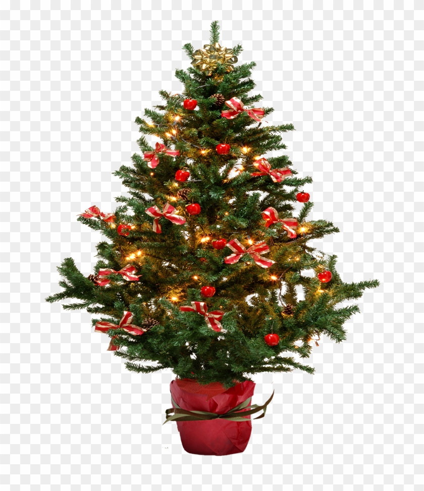 Image Small Christmas Tree Png Free Transparent Png Clipart Images Download 40+ vectors, stock photos & psd files. image small christmas tree png free