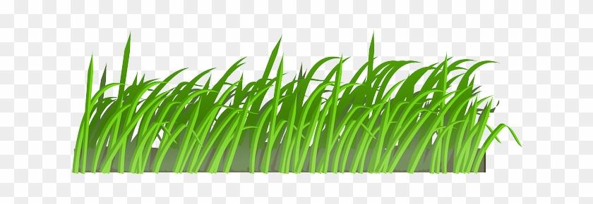 Lawn Clipart Rumput Pencil Color 5 Gambar Animasi Grass Texture Png Free Transparent Png Clipart Images Download