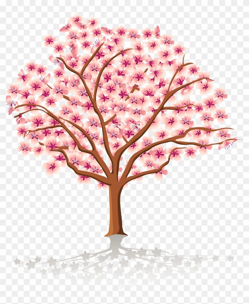 Cherry Tree Stock Images, Royalty Free Images Vectors - Spring Tree Clipart #426597