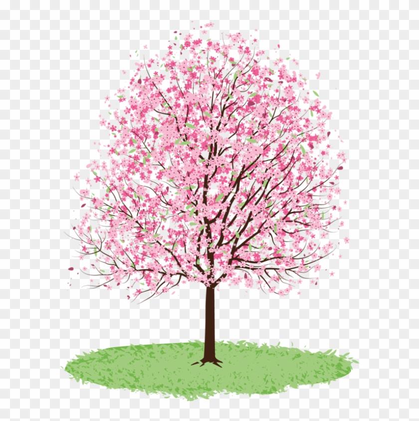 Spring Tree Cliparts - Cherry Blossom Tree Transparent #426684