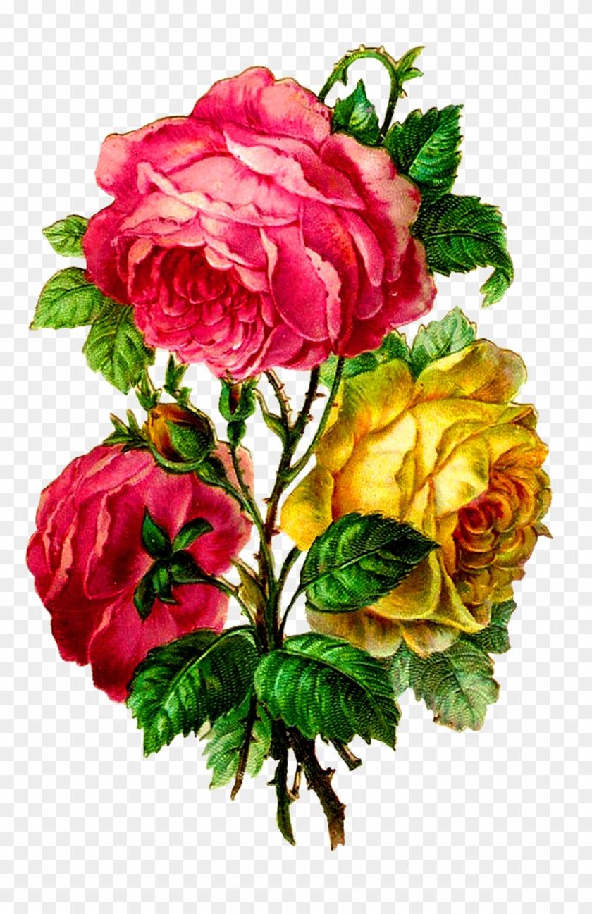 Centifolia Roses Paper Flower Bouquet Cut Flowers Centifolia Roses