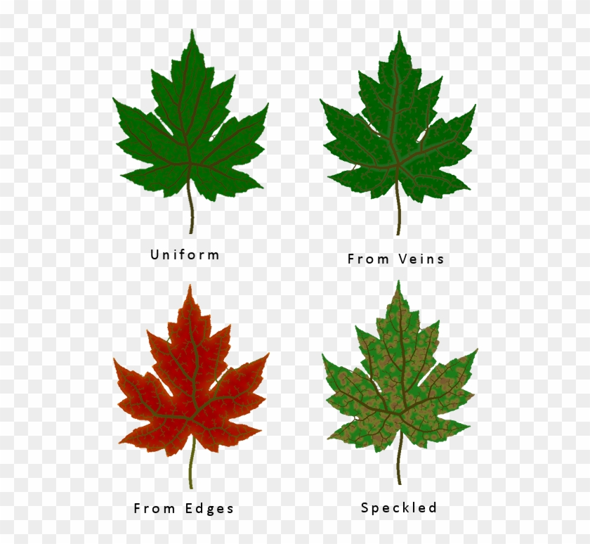 Different Leaf Texture Types Maple Leaf Free Transparent Png