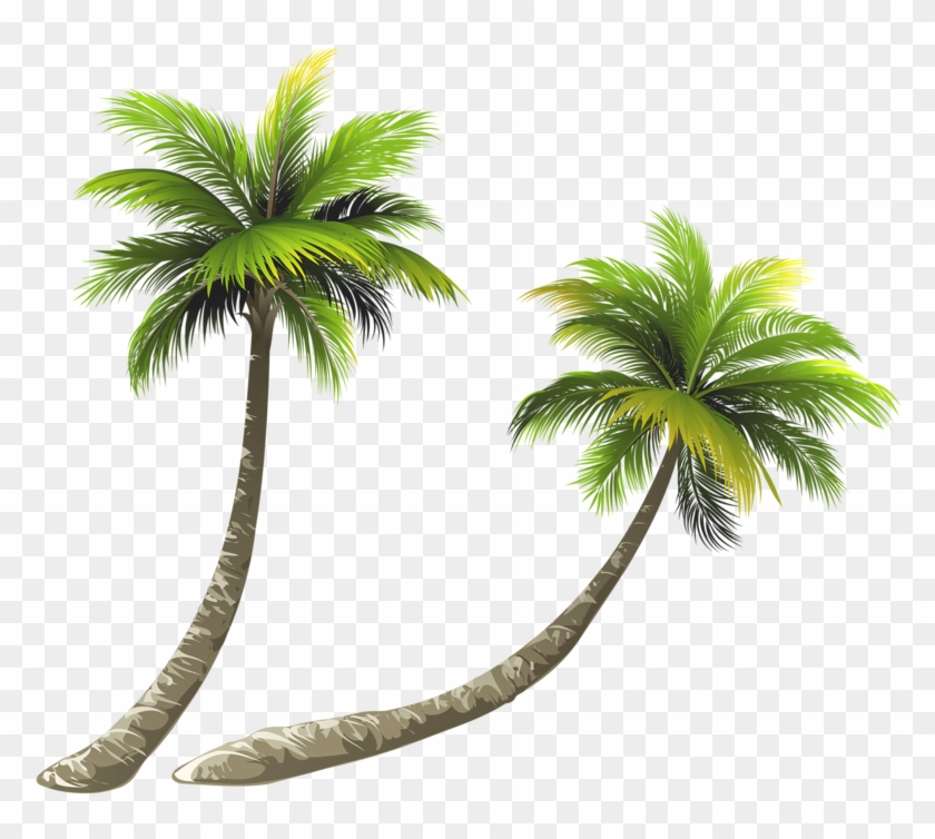 Arecaceae Coconut Royalty-free Illustration - Coconut Tree Clipart Png #429043