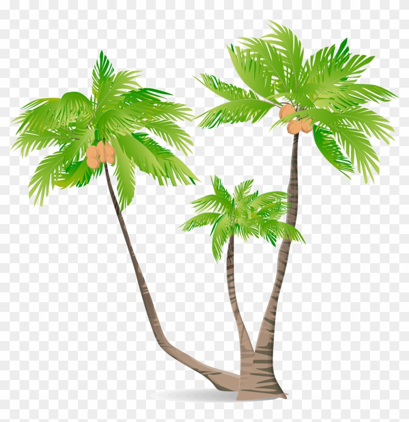 Arecaceae Green Coconut Illustration - Coconut Tree Cortoon Png #429051