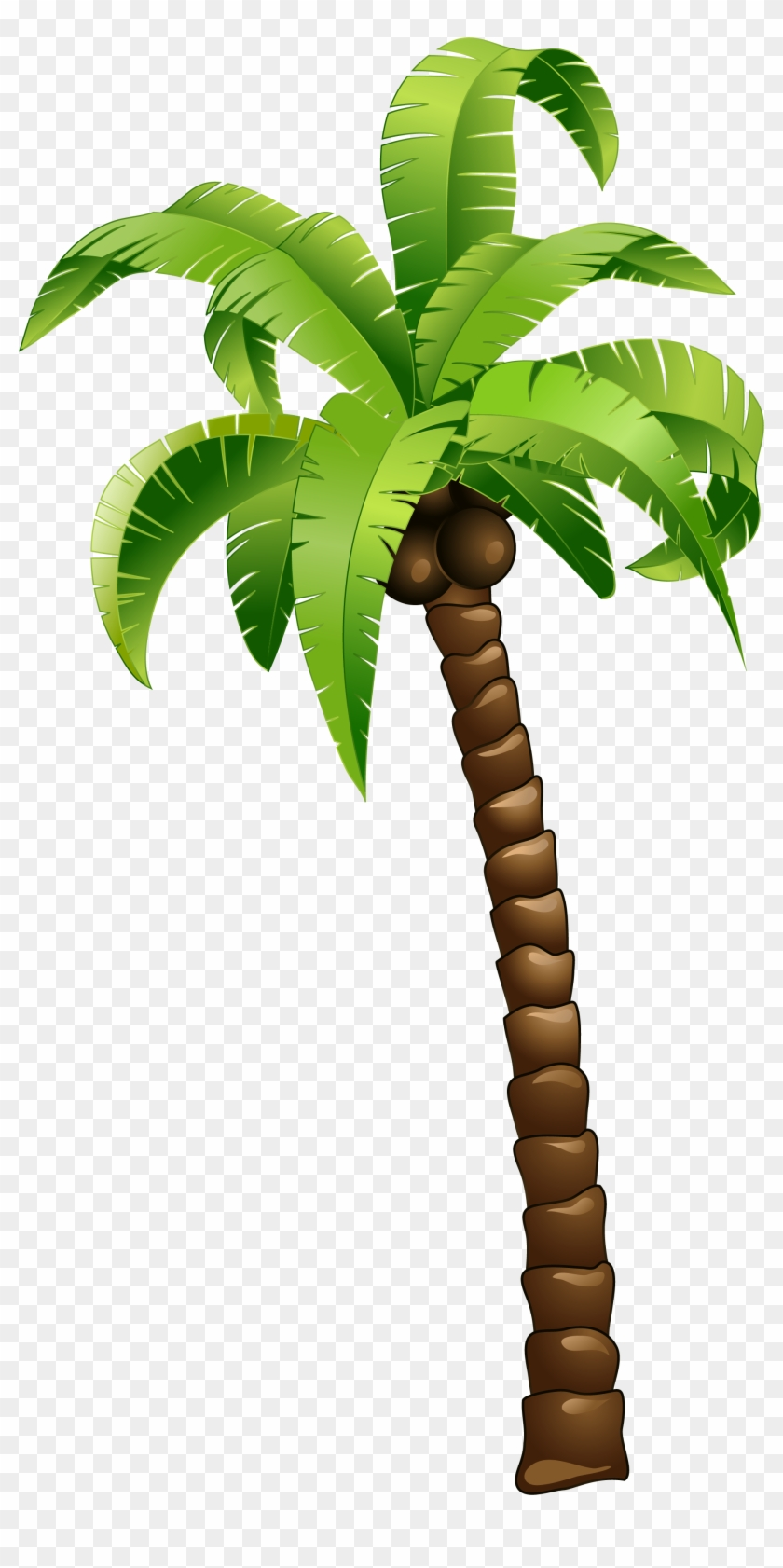 Cartoon Green Coconut Tree Cartoon Palm Tree Png Free Transparent Png Clipart Images Download Download and use them in your website, document or presentation. cartoon green coconut tree cartoon