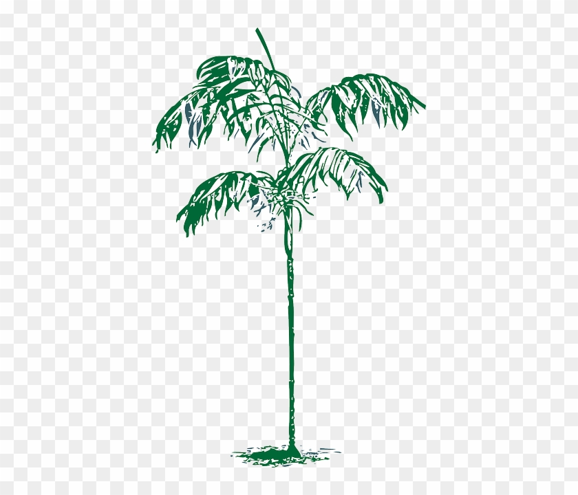 Outline, Palm, Tree, Plant, Coconut, Dates, Date - Palm Trees #429289
