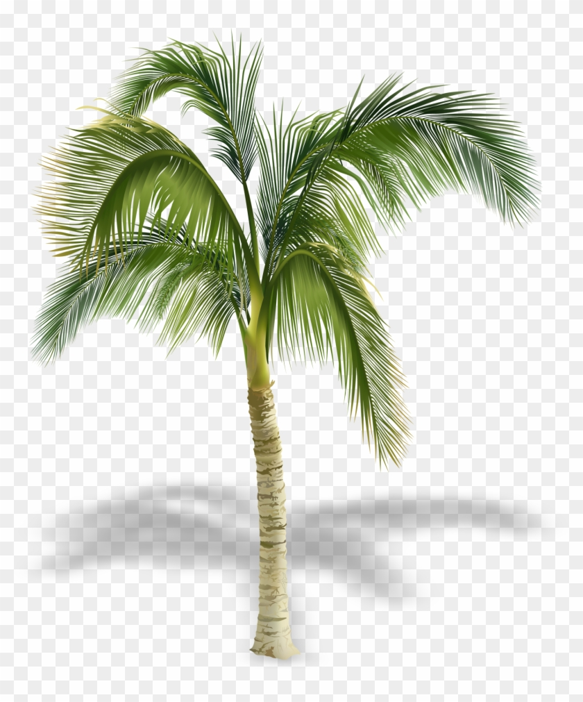 Arecaceae Stock Photography Tree Royalty-free - Palm Tree Royalty Free #429308