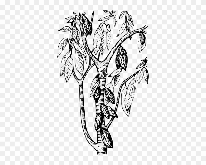 Cocoa Tree Coloring Page #432936