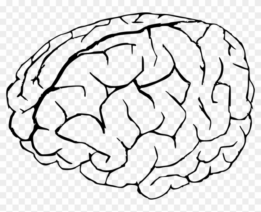 Pin Brain Clipart No Background Brain Coloring Page Free
