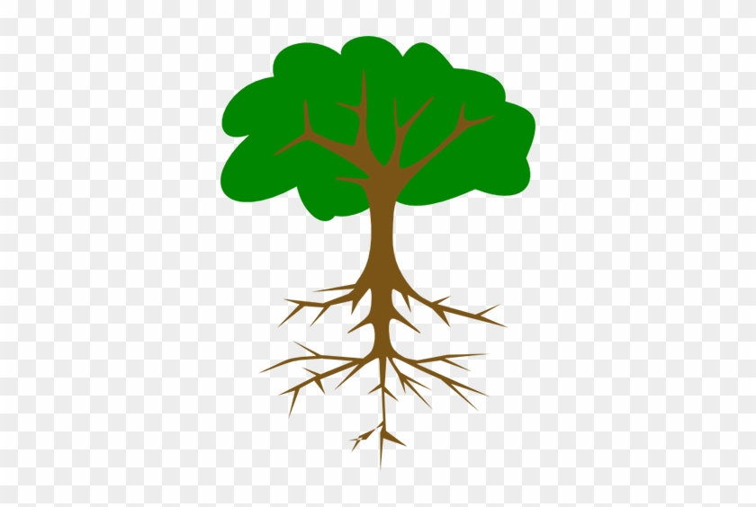 The Taproot, As The First And Earliest Of A Plant's - Tree With Tap Root #433673