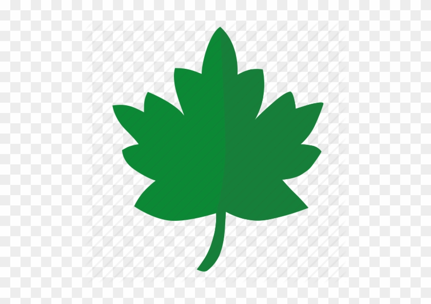 image regarding Printable Pictures of Leaves identified as Oak Leaf Icon - Printable Leaves For Grateful Tree - Cost-free