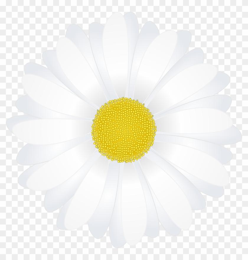 Chamomile Clipart - Margarita Flower Vector Png #435996
