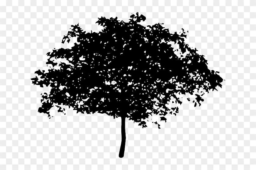 Silhouette Tree, Bush, Nature, Leaves, Trunk, Silhouette - Voice Of The Children In The Apple Tree #436324