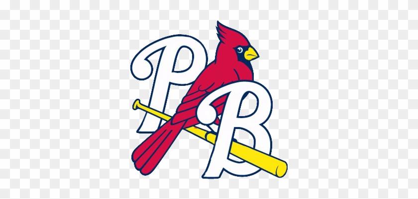 Logo Pb Color - St Louis Cardinals Bird On Bat Logo Png #436483