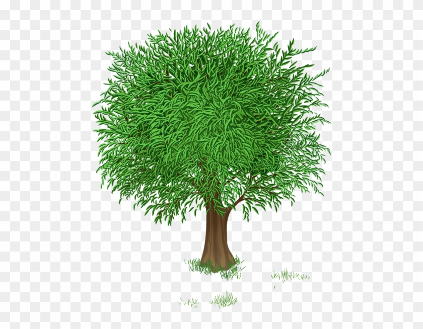 Spring Tree Clipart #436639
