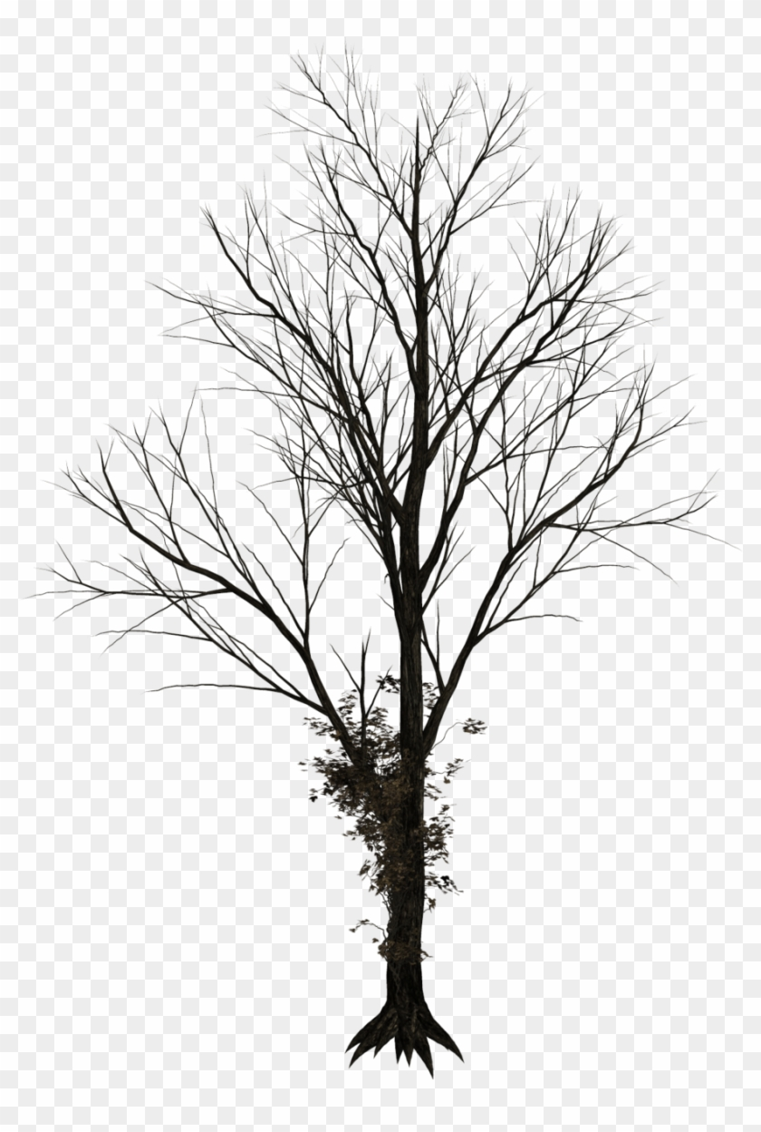 Bare Tree Png Leafless Trees Png Free Transparent Png Clipart