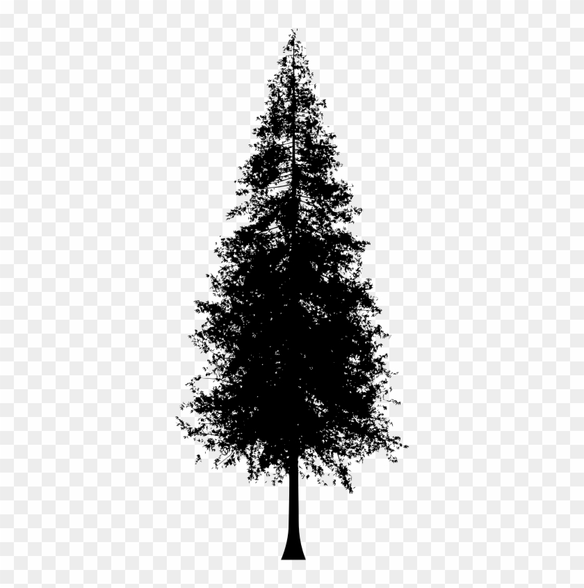 Medium Image - Redwood Tree Silhouette Vector #437844