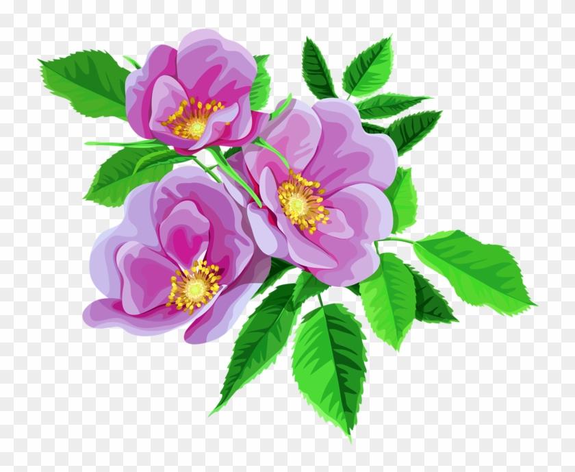 free clip art flowers transparent png clipart images free - 900×640