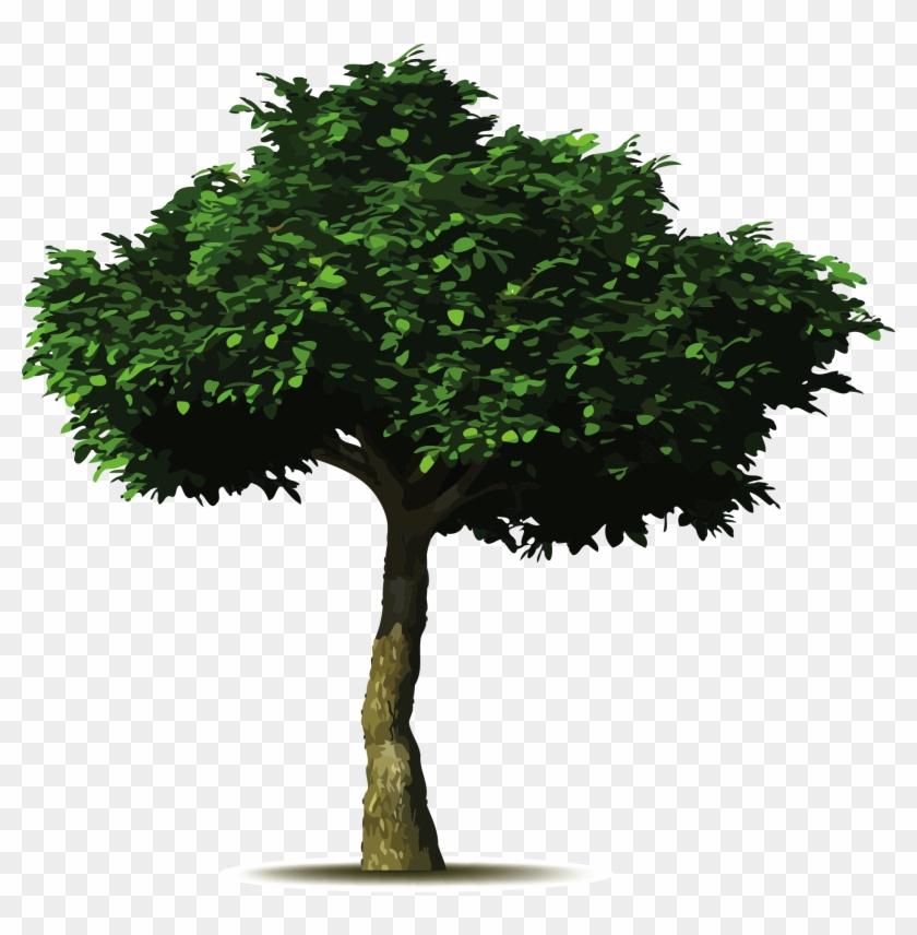 Arbol Simbolo / - Save Water Plant Trees #439138