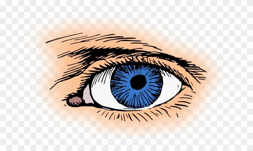 Blue Eyes Clipart Eyeball - Eyes Clipart #443251