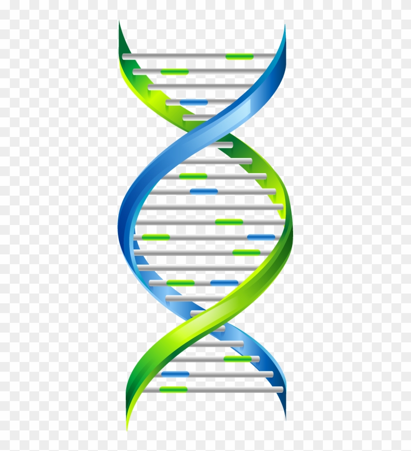 Dna Png - Dna Chain Png #443334