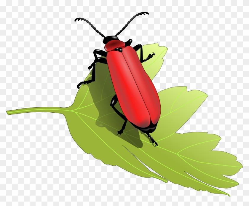 Cardinal Beetle Png Images - Beetles Clip Art #445152