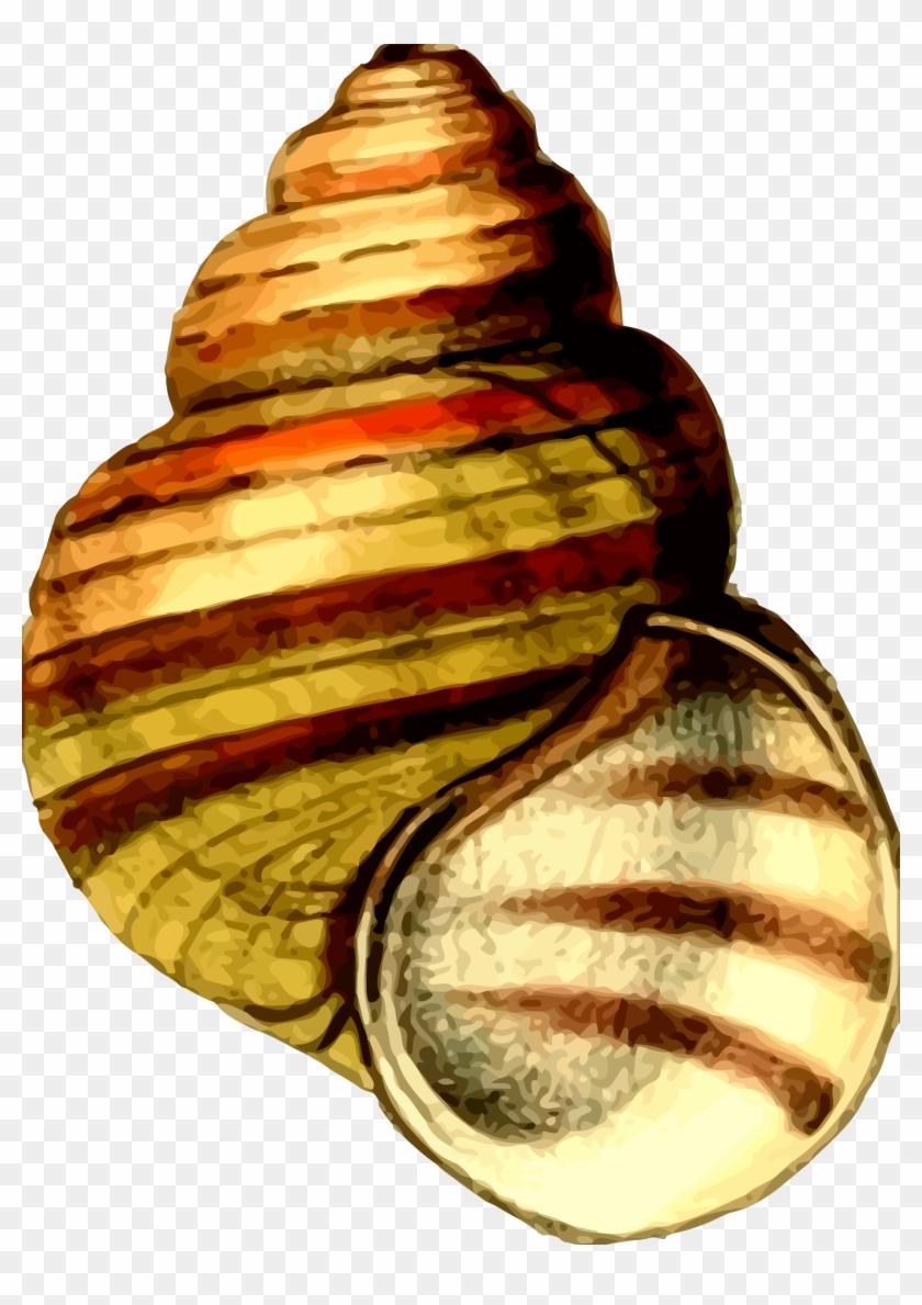 Big Image - Clip Art Sea Shells #446702
