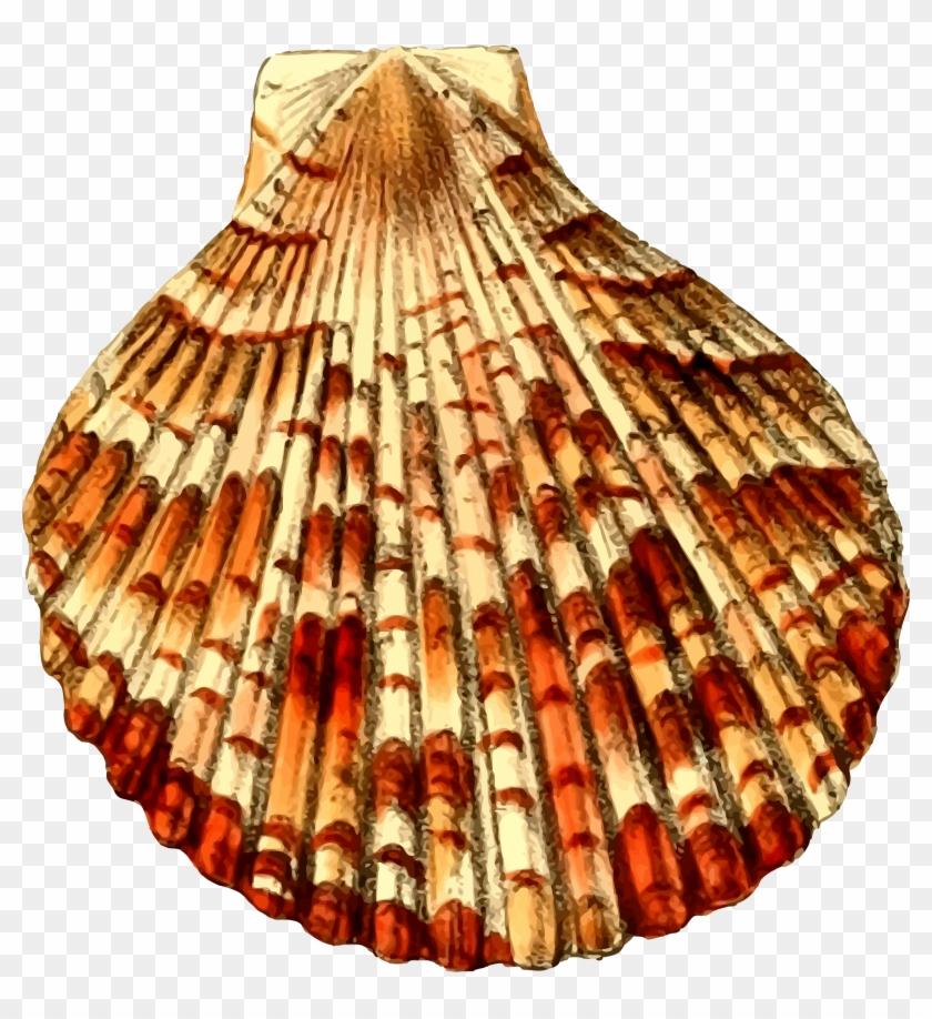 Big Image - Sea Shell 30 #446799