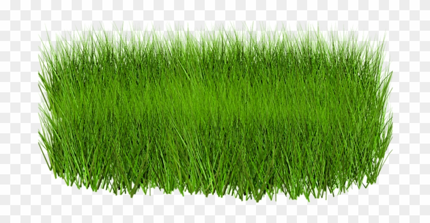Grass Png Image, Green Picture - Green Grass Images Png #450205