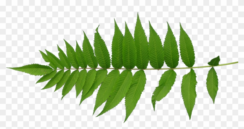 Leaf Texture Mapping Plant Stem - Leaf Texture Png #450368