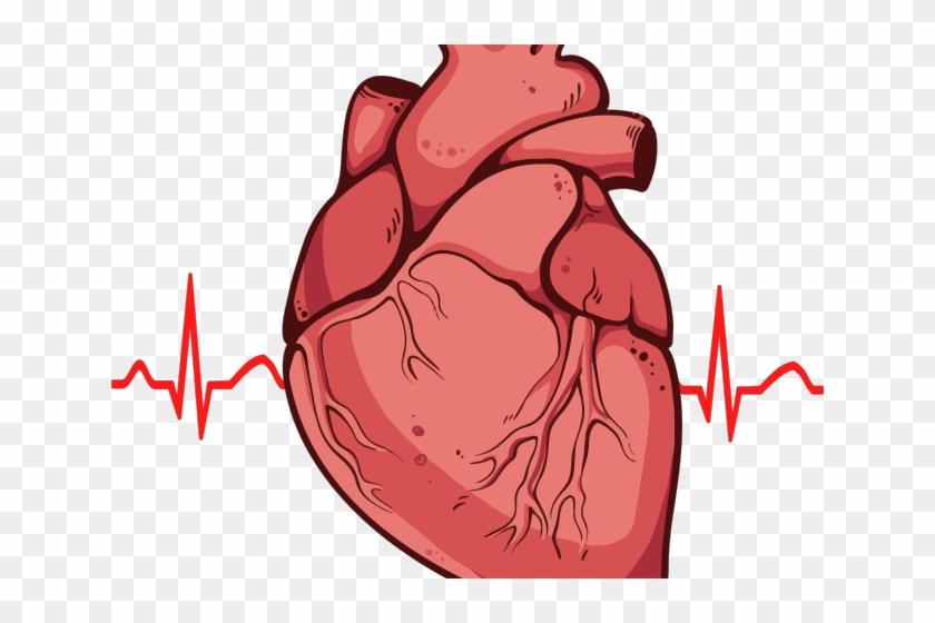 Heart Clipart Clipart Real Heart - Real Heart Drawing #450744