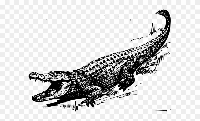 Alligator Black And White Free Transparent Png Clipart Images Download