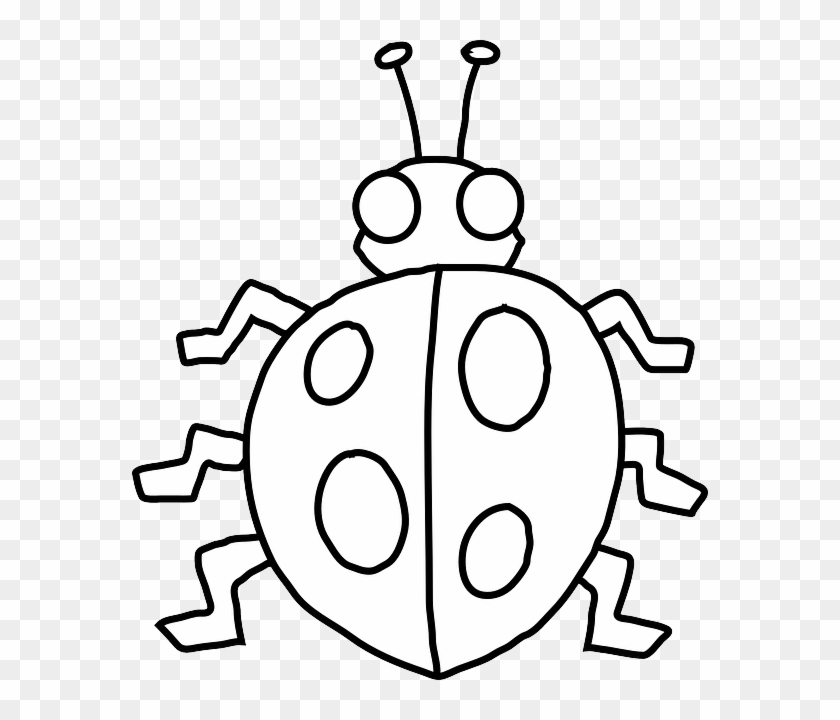 Ladybird Drawing Black And White Clip Art