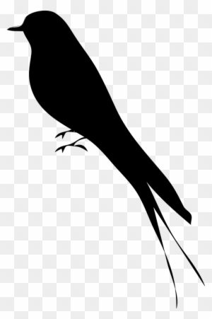 Bird Clipart Transparent Png Clipart Images Free Download Clipartmax