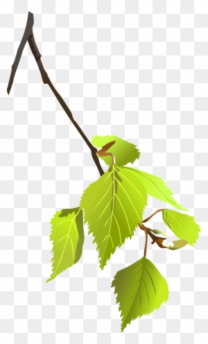 birch tree branch clipart tree branch vector png free