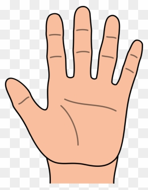Hand Clipart, Transparent PNG Clipart Images Free Download - ClipartMax