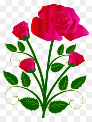 Rose Drawing Clip Art Transparent Png Clipart Images Free Download