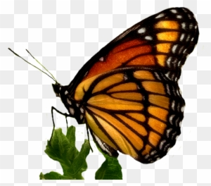 william wordsworth to a butterfly