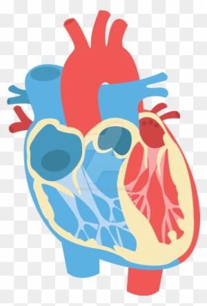 Human Heart Clipart - Heart Diagram No Labels - Free ...