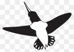 Black And White Hummingbird Shower Curtain