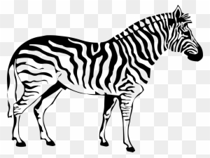 930 Top Colouring Pages Cute Zebra  Images