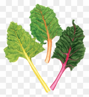 Rainbow Chard Chard Free Transparent Png Clipart Images Download