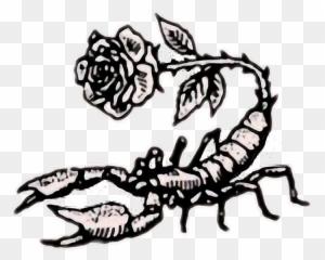 Tumblr Rose Rock Scorpion Aesthetic Retro Flower Art Scorpion Rose